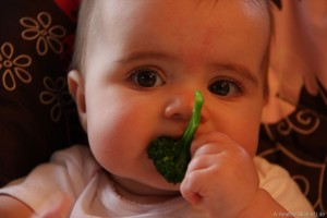 baby-led-solids-broccoli